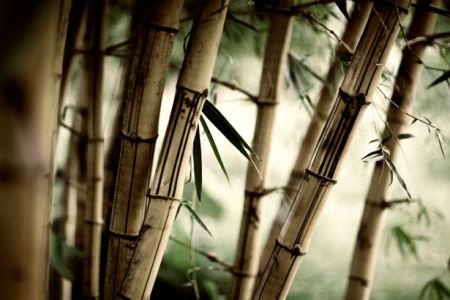 Бамбук - Обои на стену (flowers-0000249)