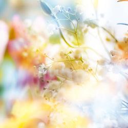 flowers-0000331