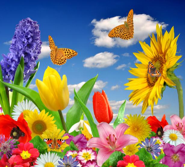 Фото обои Букет разных цветов (flowers-0000431)