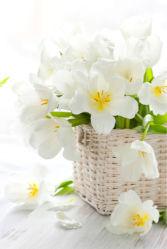 flowers-0000447