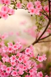 flowers-0000636