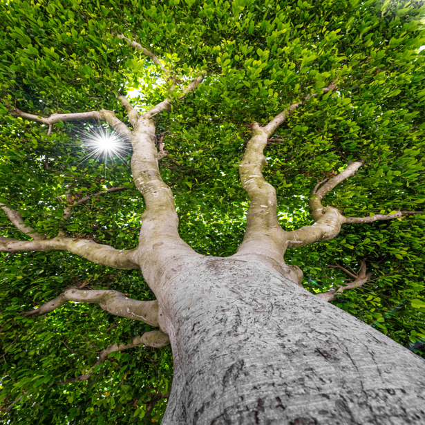 Фотообои бонсай ствол (nature-0000737)