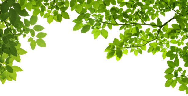 листья деревья песок ассоциация делают для того