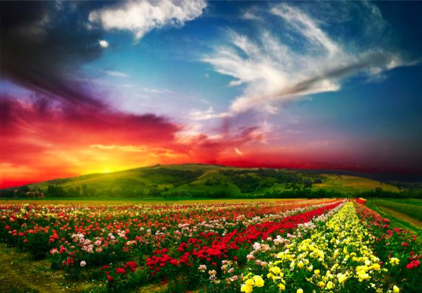 Фотообои с природой цветочные поля (nature-00087)