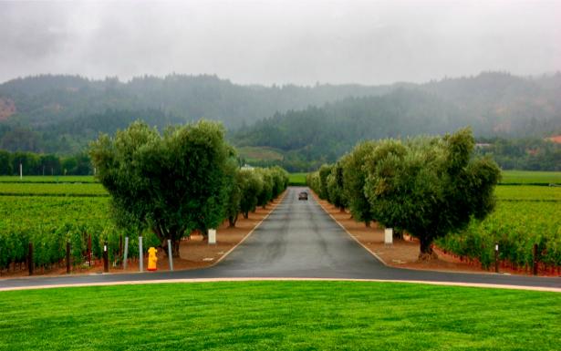 Фотообои пейзаж дорога горы лес (nature-00225)