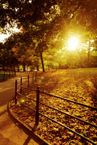 Фотообои лес закат дрожки в парке (nature-00285)