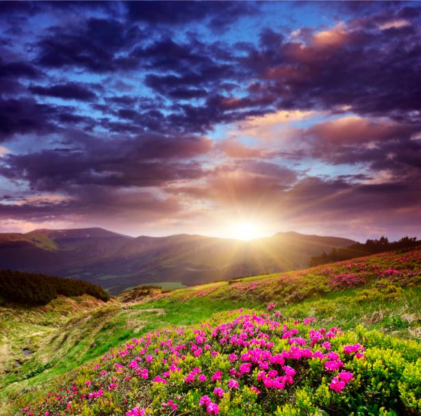 Фотообои горы закат поле цветов (nature-00428)