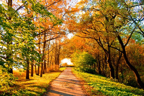 Фотообои осенняя дорога в лесу (nature-00529)