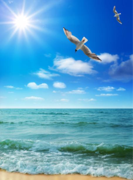Фотообои фото море берег чайка (sea-0000075)