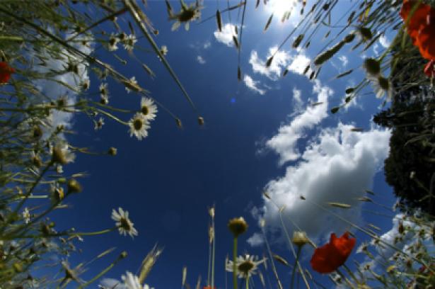 Фотообои небо одуванчики трава (sky-0000031)