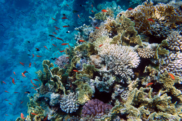 Фотообои коралловый риф под водой (underwater-world-00042)