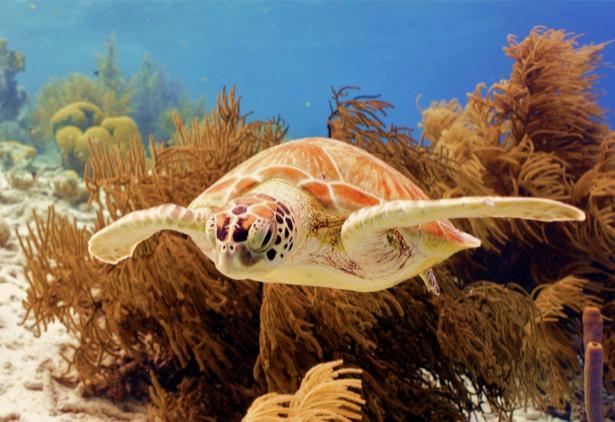 Фотообои в ванную черепаха в море (underwater-world-00141)