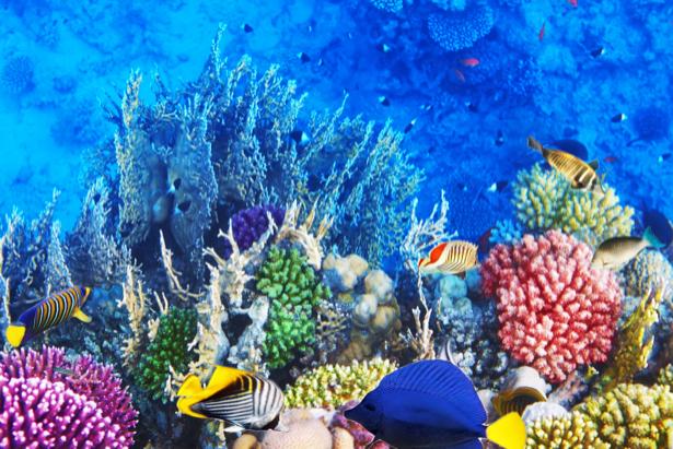 Фотообои в ванной комнате кораллы (underwater-world-00145)