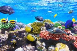 underwater-world-00157