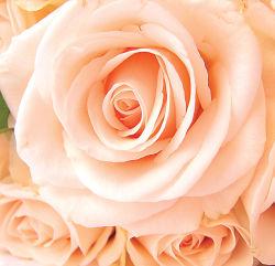1.86x1.8-flowers-0000288