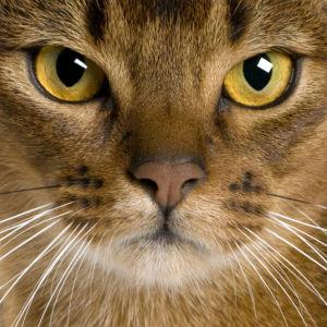Фотообои кот усатый (animals-0000167)