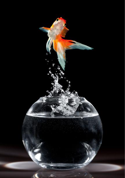 Фотообои золотая рыбка из аквариума (animals-0000216)