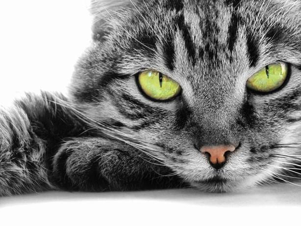 Фотообои Зеленые глаза (animals-568)