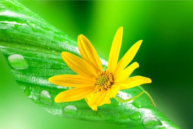 Фотообои цветов на стену Желтый цветок (flowers-0000224)