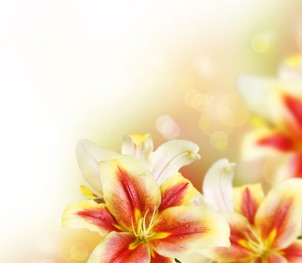 Фото обои на стену Букет цветов (flowers-0000398)