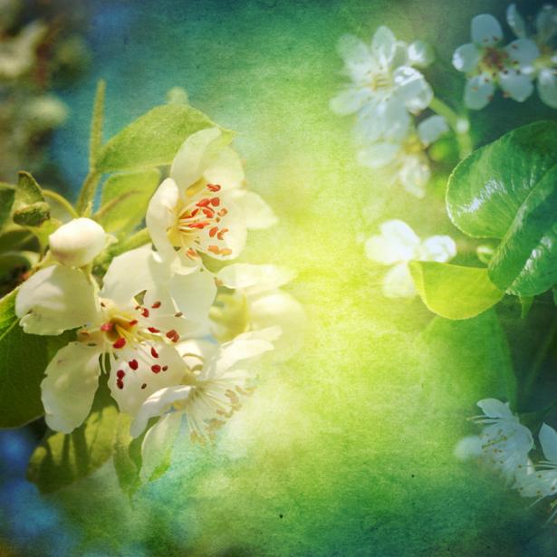 Обои фото ветка цветущего дерева (flowers-0000421)