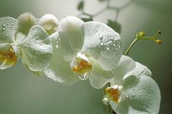 flowers-0000455