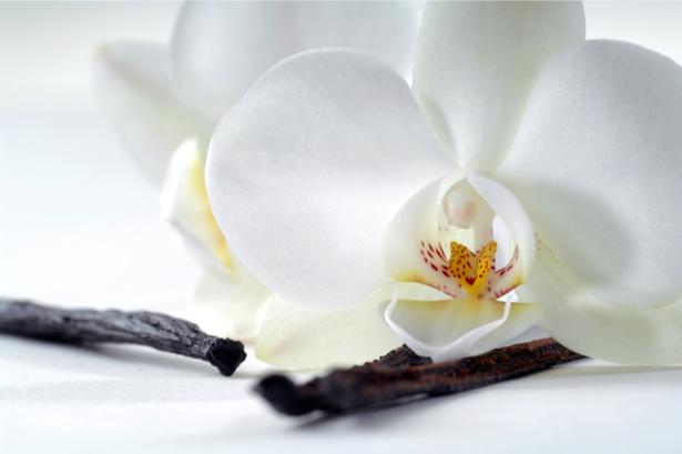 Фото обои цветок орхидея и ваниль (flowers-0000521)