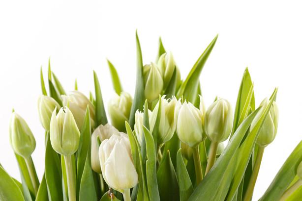 Фотообои Букет белых тюльпанов (flowers-795)