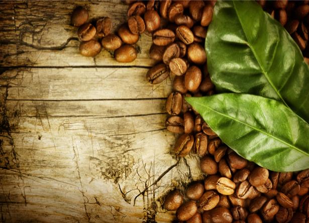 Фотообои для кухни зерна кофе лист (food-0000029)