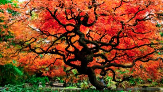 Фотообои красное дерево парк (nature-00393)