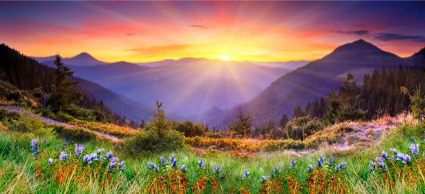 Фотообои горы на закате поле цветов (nature-00427)