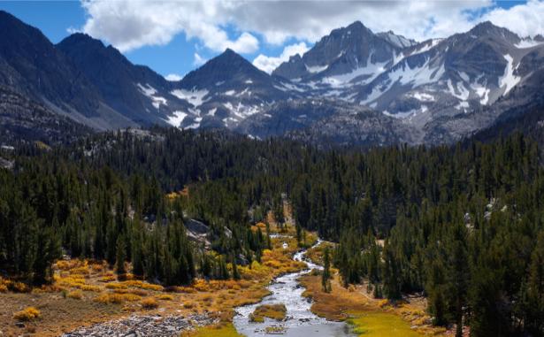 Фотообои лес высокие горы (nature-00470)