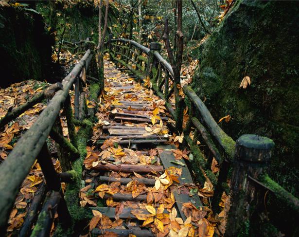 Фотообои мост в лесу старый (nature-00554)