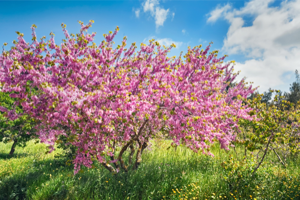 Фотообои сад цветение (nature-00569)