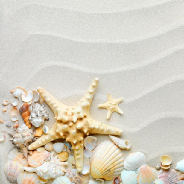 Фотообои в ванную ракушки на белом (sea-0000112)