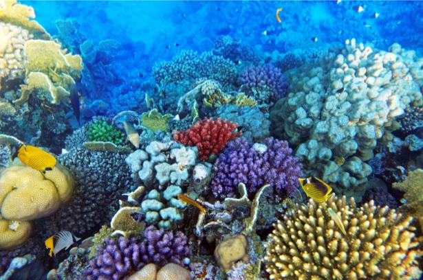 Подводный мир фотообои для ванной (underwater-world-00168)