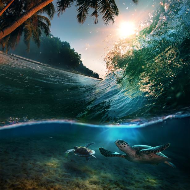 Фотообои в ванную черепаха под водой (underwater-world-00214)