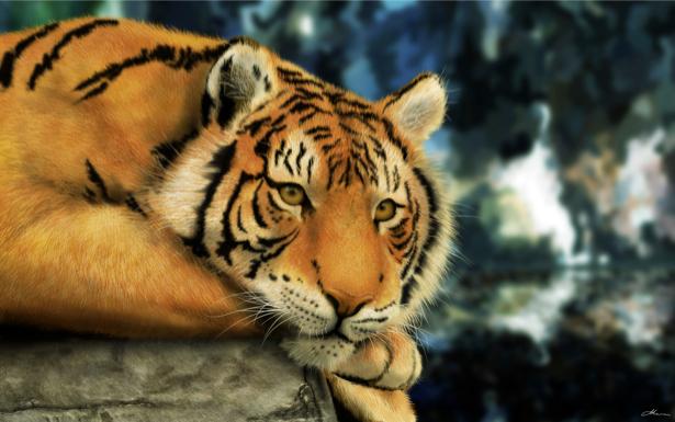 Фотообои животное тигр (animals-0000030)