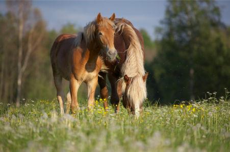 Фотообои конь и лошадь в природе (animals-0000120)