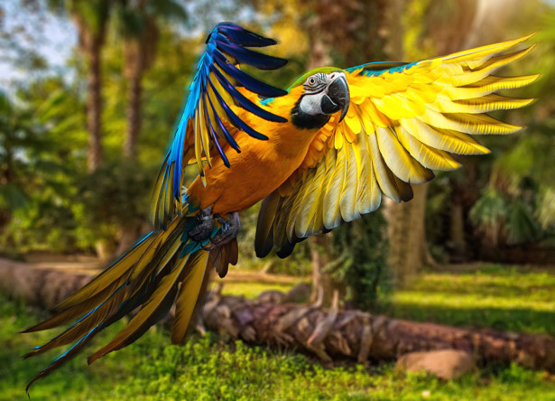 Фотообои Красавец попугай (animals-535)