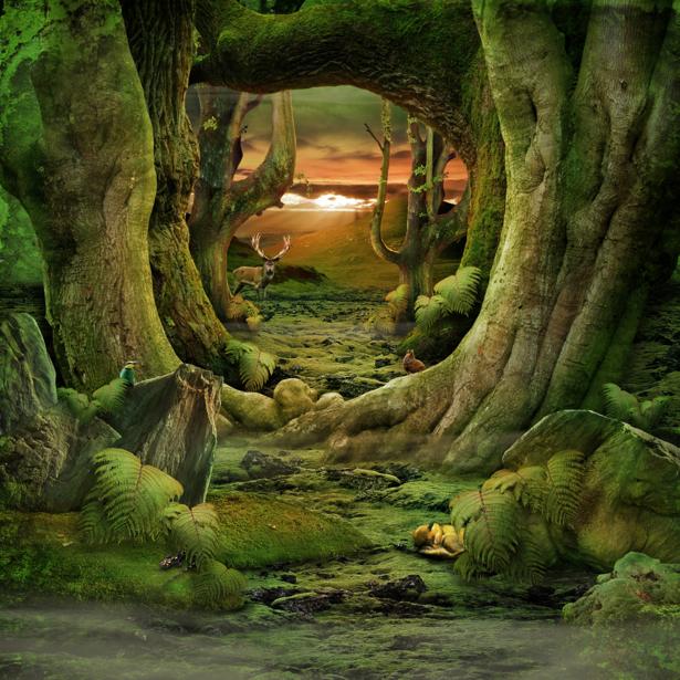 Фотообои в детскую сказочный лес (fantasy-0000154)