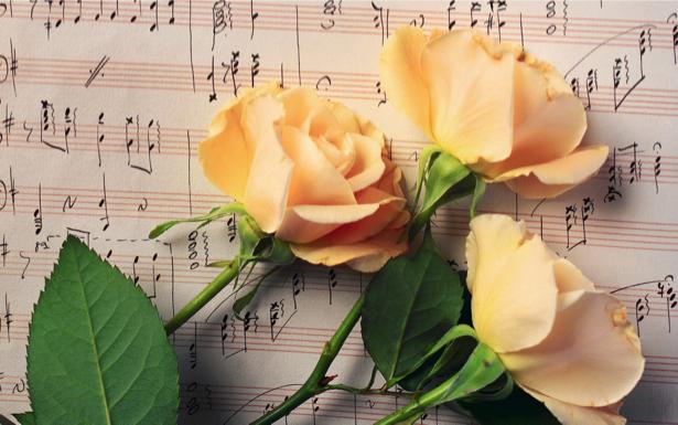 Желтые розы фотообои на стену цветы (flowers-0000094)