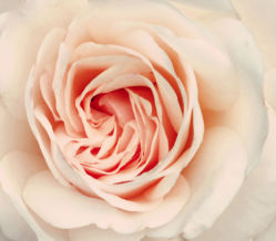 flowers-0000261