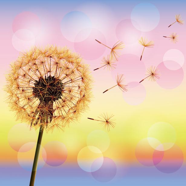 Фото обои обои на стену одуванчик (flowers-0000604)