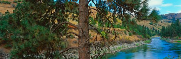 Фотообои лесная панорама ель река (nature-00346)