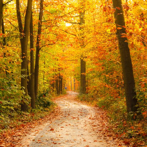 Фотообои осенний лес дорога листва (nature-00509)