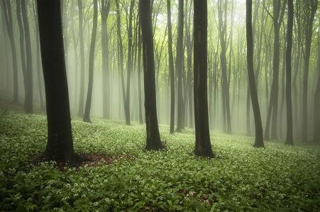 Фотообои Цветение в лесу (nature-877)