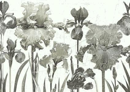 Фотообои Ирисы композиция (printmaking-0000080)