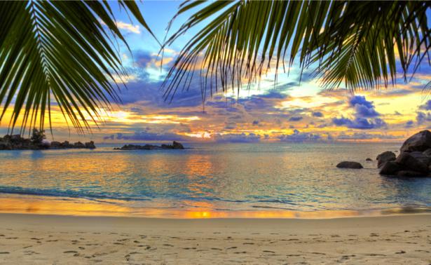 Фотообои море на закате берег пальма (sea-0000284)