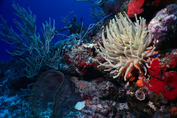 Фотообои в ванну кораллы белые (underwater-world-00062)